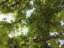단잠을 자고 난 듯 개운한 의령 <충익사 모과나무> 깊고 넓은 그늘