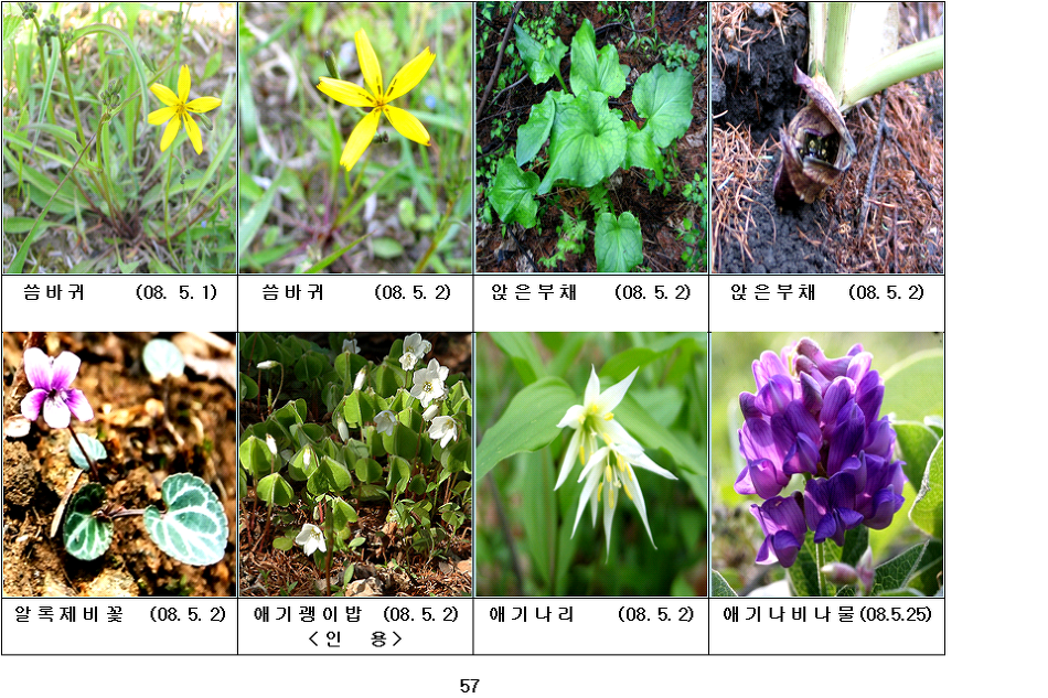 봄에 피는 야생화(5월-15)