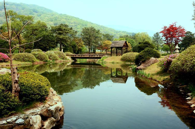 손바닥 정원  전원주택에서의 정원 - Daum 카페