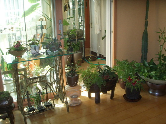 차이나데코회원님들의 예쁜 아파트 실내정원 사진