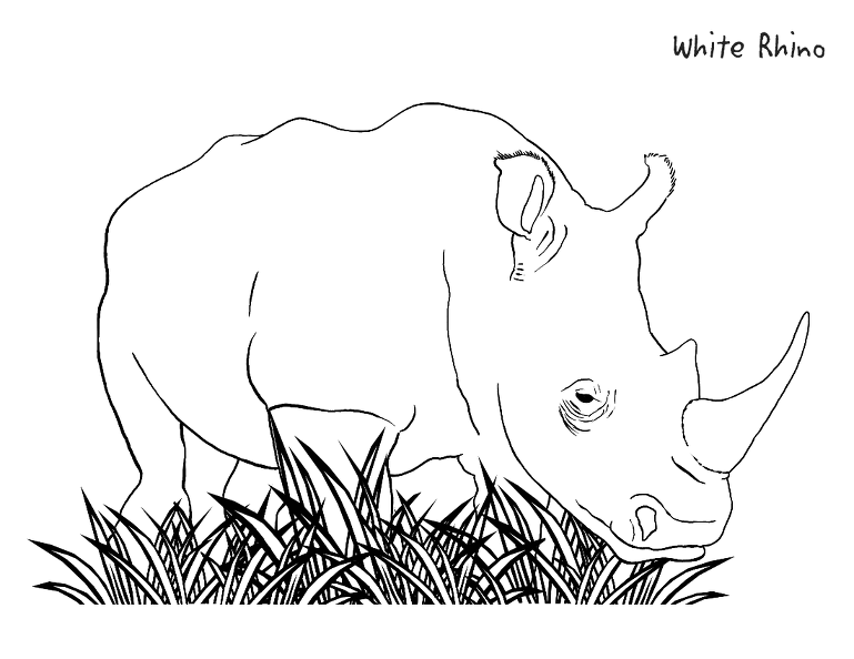 rhinoceros beetle coloring pages - photo#30